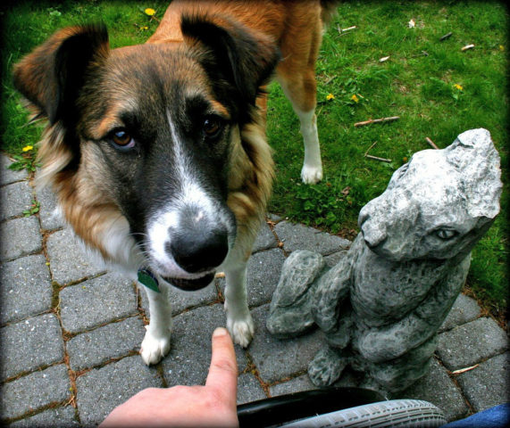 How To Stop Bad Dog Behavior: Solutions That Work For