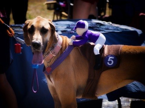 dog-racehorse-jockey-costume