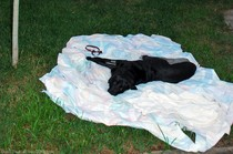 dog-resting-on-blanket-in-yard.jpg
