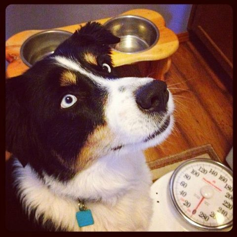A dog schedule regulates your dog's day -- and makes feeding and housetraining easier.