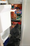 Our dog knows right where to look to find a stuffed Kong toy... top shelf in the freezer!