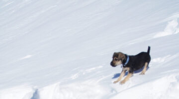 Funny Dog Snow Videos: Dogs Body Sliding Down Snowy Hills!