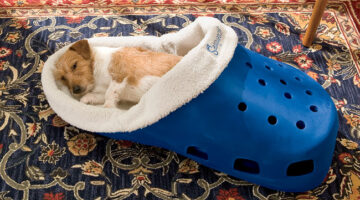 Before You Buy A New Dog Bed… Some Luxury Dog Beds Worth Considering