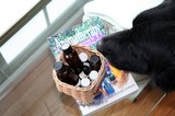 Our dog, Destin, likes aromatherapy!