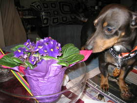 dog-sniffs-flowers-by-MamaOhara.jpg