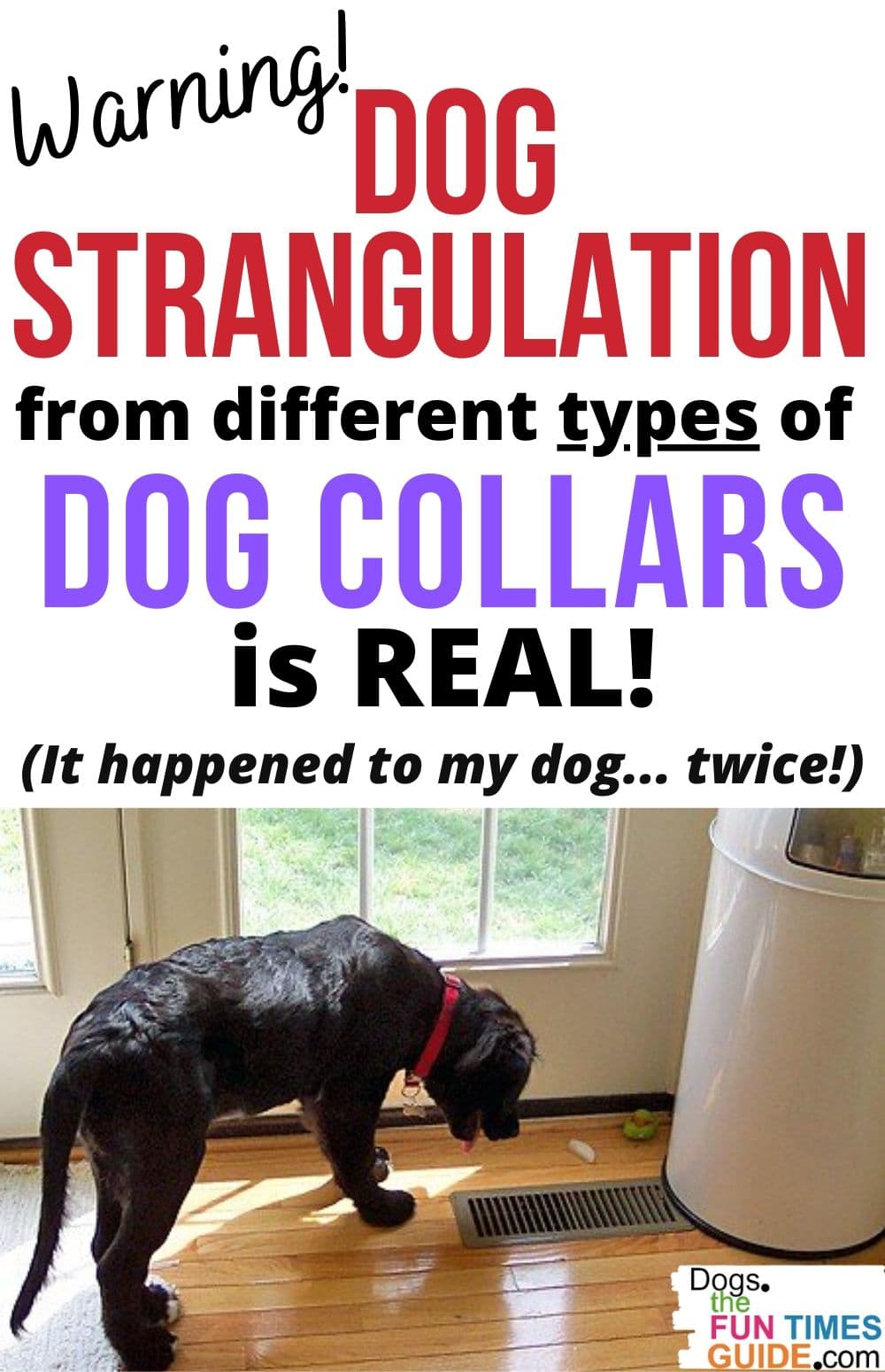 WARNING: 2 Different Types Of Dog Collars Almost Strangled My Dog! Here's Which Dog Collars Are Safe