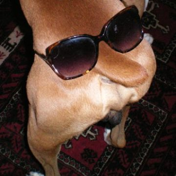 You never know... your dog may prefer to wear them over his tail instead of over his eyes!