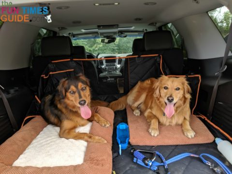 Our puppies enjoy their cargo kennel area!