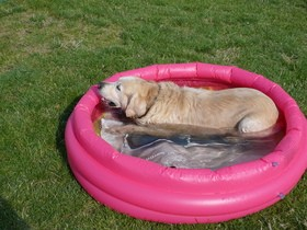 dog-swimming-pool-by-philippbosch.jpg