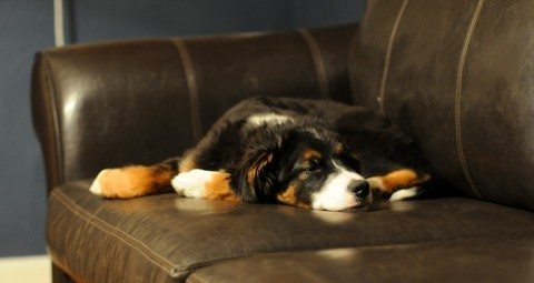 dog diarrhea home remedies that you can try at home
