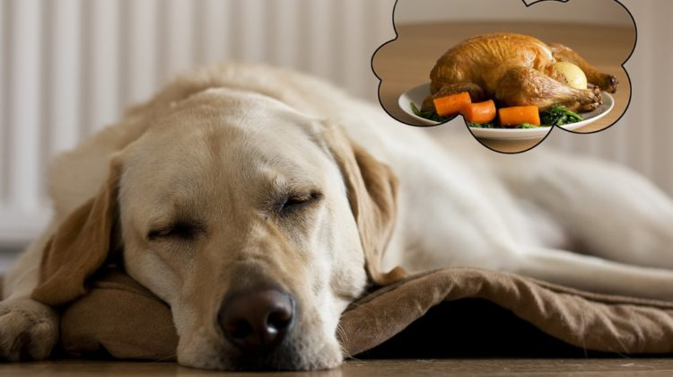 Dog Thanksgiving Tips: Can Dogs Eat Turkey?