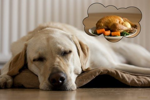 dreaming dog thanksgiving turkey