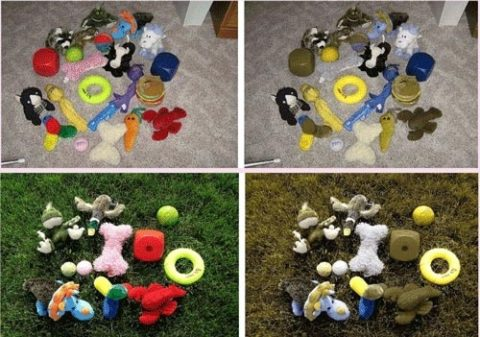Here you can see the best color for dog toys - Various dog toy colors as seen by humans and dogs against gray carpet, and against green grass.