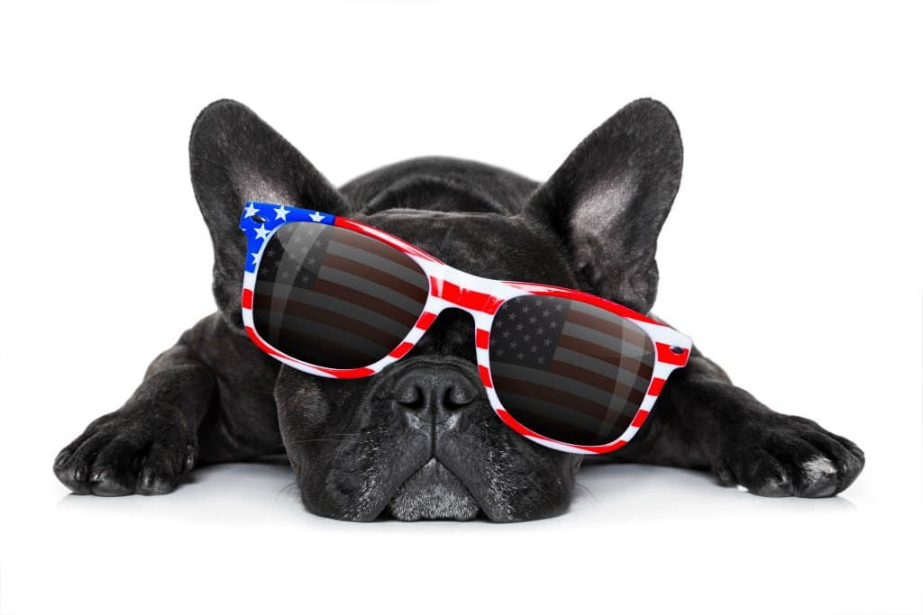 Fourth of July tips for dog owners!