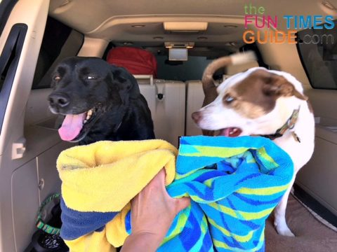 Dogs can be messy. It's smart to keep extra towels in the car when you're traveling with dogs.