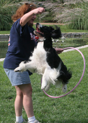 dog trick videos start with the easy ones then try the