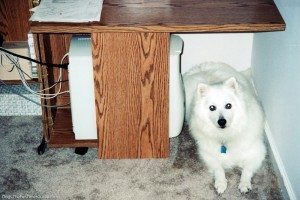 dog-under-table
