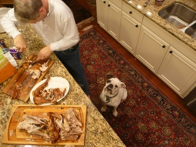 Dog anxiously waiting for some turkey scraps to hit the floor.