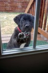 This little doggie wants in...