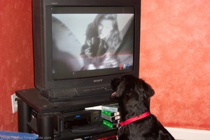 dog-watches-tv.jpg