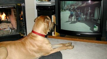 Can Dogs Watch TV? Dog Eyesight Compared To Human Eyesight