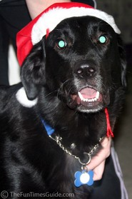 dog-wearing-santa-hat.jpg