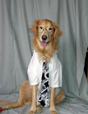 dog-wearing-shirt-and-tie.jpg
