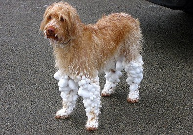 dog-wearing-snow-socks.jpg