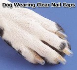 Dog wearing Soft Claws nail caps.