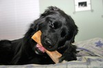 Destin wrapping his big furry lips around a marrow bone, stuffed with goodies!