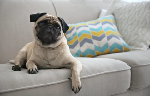 Whether you let your dogs up on the furniture or not, dog fur flies EVERYWHERE. You can bet there's some attached to your decorative pillows right now.