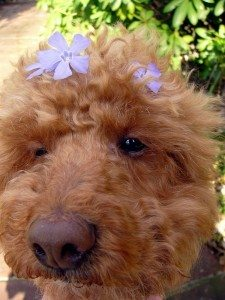 dog-with-flower-petals