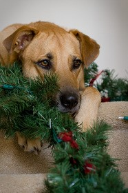dog-with-lights-garland-by-DJ-Lein.jpg