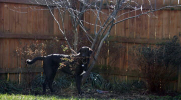 Dogs Who Like Sticks… May Uproot Your Trees!