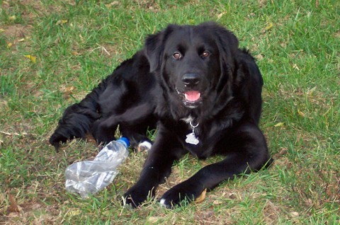 dog-with-water-bottle-toy.jpg