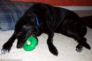 dog-wrapping-his-mouth-around-dog-toy.jpg