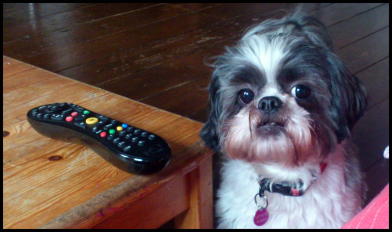 How to teach your dog to bring anything... like the TV remote control.