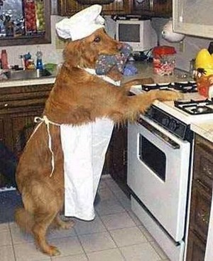 doggie-chef-in-the-kitchen.jpg