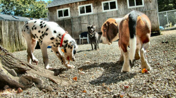 What To Expect The First Time You Try Doggie Daycare Instead Of Leaving Your Dog Home Alone