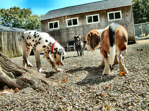 What To Expect The First Time You Try Doggie Daycare
