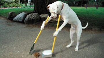 Top 10 Reasons To Pick Up Your Dog's Poop