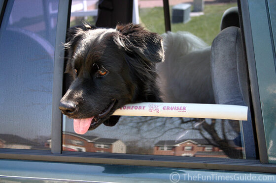 Comfort Cruiser... a window bumper or dog chin rest for car rides.