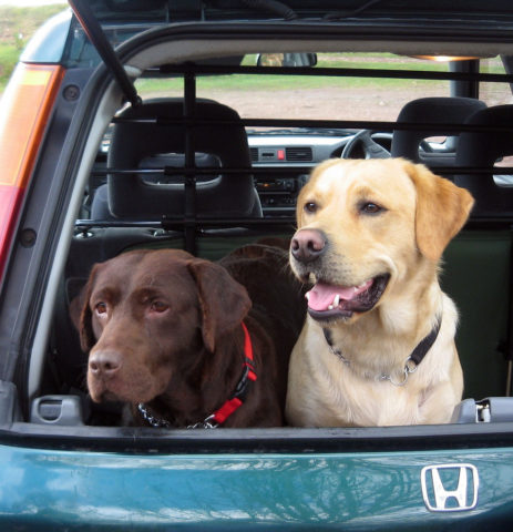 Best Cars For Dog Owners What To Look For In A Dog