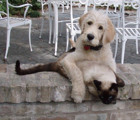 dogs-and-cats