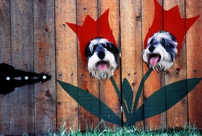 dogs-as-flowers.jpg