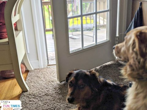 Our back door is the 'doggie door' where they go in and out all the time. There are always nose prints, drool, and dirt marks on the door frame and the glass!