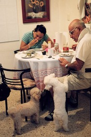 dogs-beg-for-table-scraps-by-pacomexico.jpg