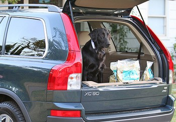 A dog in a dogmobile... a Volvo XC90 SUV.
