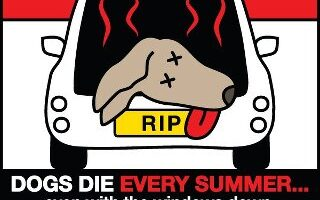 Dog Hot Car Laws + What You Should Do If You See A Dog Left In A Hot Car