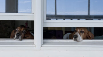 Got Dogs?… Better Check Your Doors Windows!